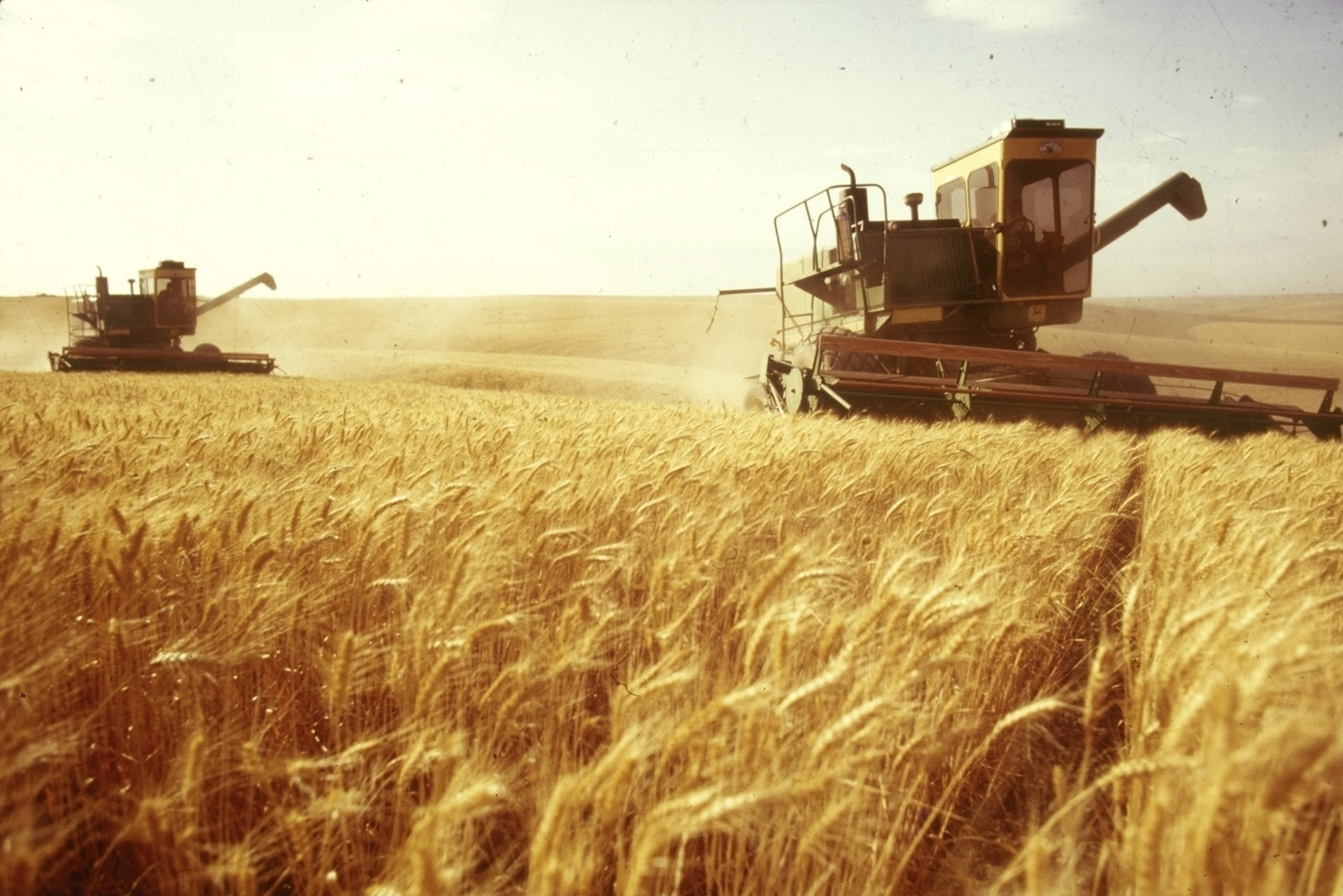 Ukraine harvests first million tons of grain - Business - News ...